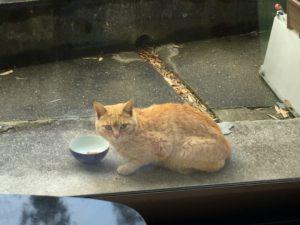 盗み食い 野良猫
