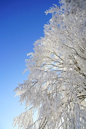冬至 影響