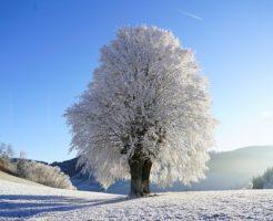 冬至 対策